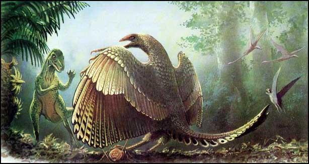 Относится ли древняя птица к мелким